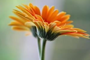 a-stilling-of-the-soul- prayer whisper WoJ-file