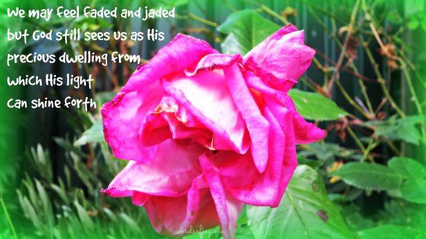rose WoJ pin