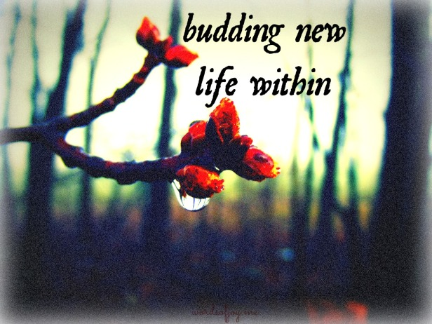 budding new life within - WoJ