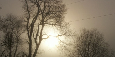 season of advent - November mist - trees