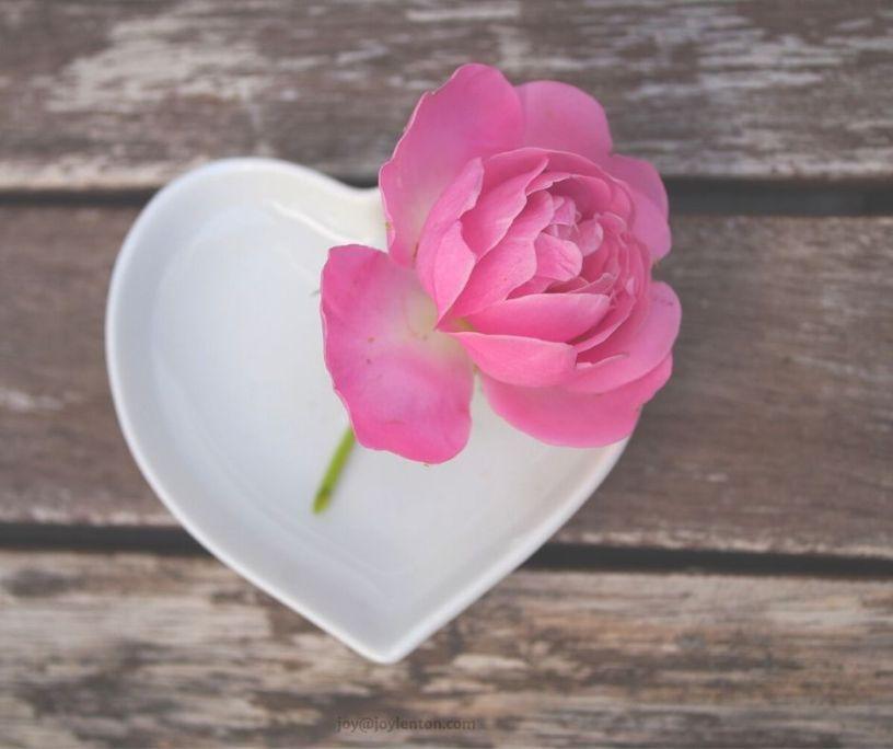 simplicity - getting back to basics @joylenton.com - rose - heart