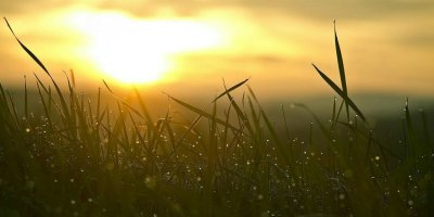 slow - sunset - grass - a mindful way to experience greater rest and joy @joylenton.com