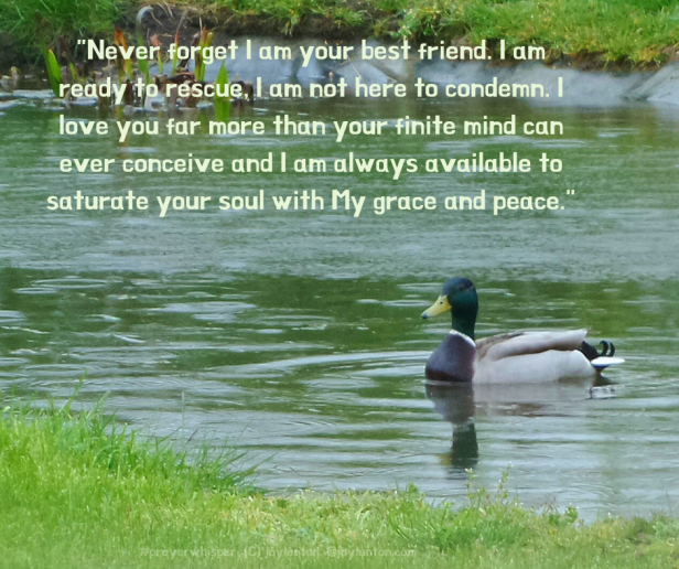 peace - duck - grass - pond - rain - Never forget I am your best friend quote - prayer whisper excerpt (C) joylenton @joylenton.com