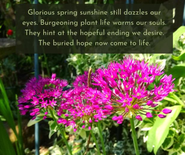 begin - spring flowers - garden - buried hope quote (C) joylenton @joylenton.com