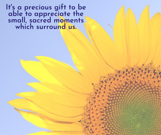 precious - sunflower - blue sky -It's a precious gift quote (C) joylenton @joylenton.com