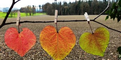 release - autumn leaves - trees - learning how to let go and rest @joylenton.com
